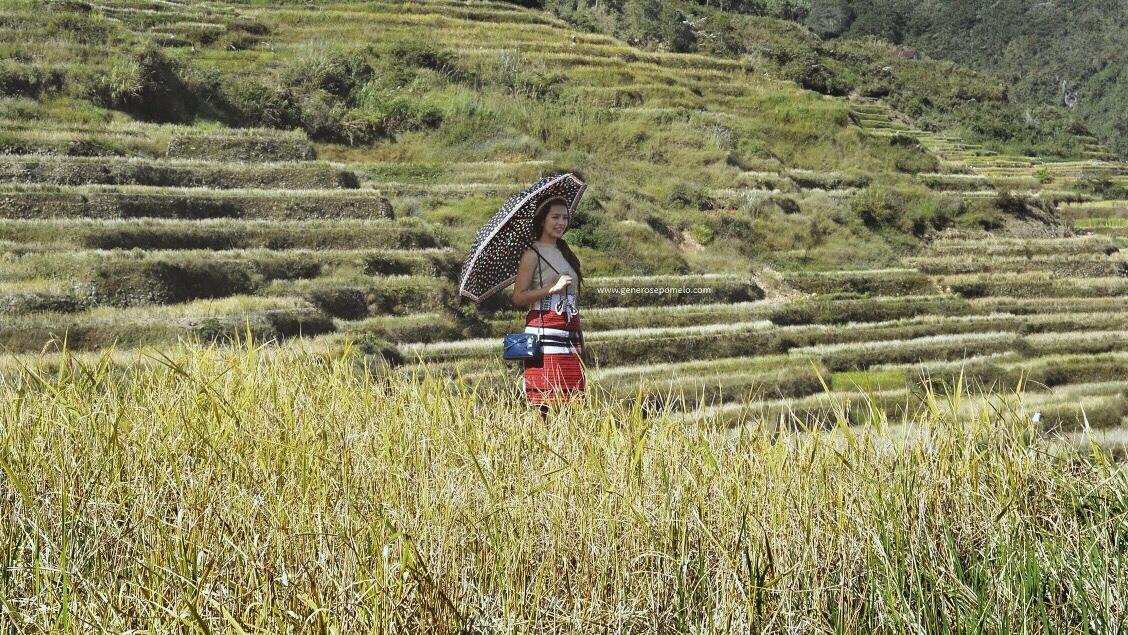 Maligcong Rice Terraces, Bontoc Indigenous People