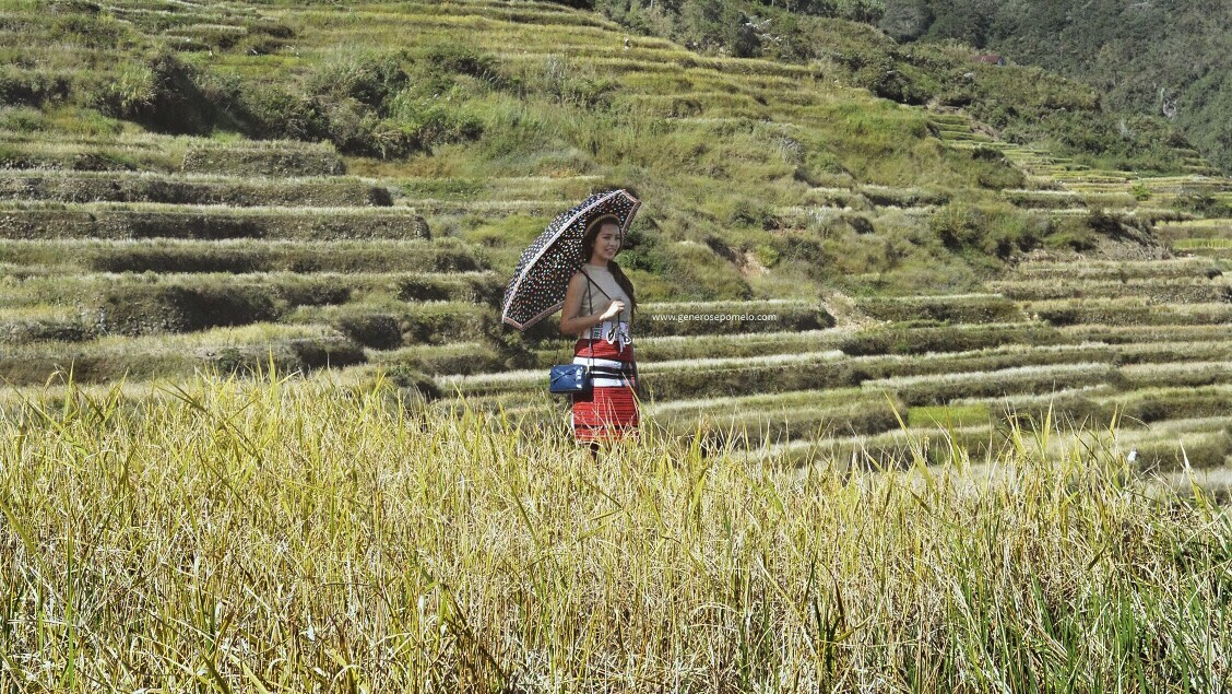 Maligcong Rice Terraces, Bontoc Indigenous People